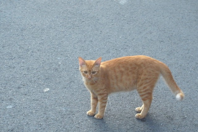 Today's Cat@2010-09-13