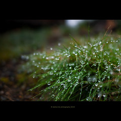 After The Rain (stella-mia) Tags: autumn blur fall nature water grass rain weather lumix droplets tears mood dof bokeh pov drop panasonic explore dew pancake 20mm raining aftertherain waterdroplets gf1 explored dmcgf1 panasoniclumixdmcgf1 maihaugenlillehamer annakrmcke