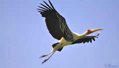 Perfect Take-off (FRANCO_JO) Tags: blue sky india nature birds animal nikon poetry poem flight chennai