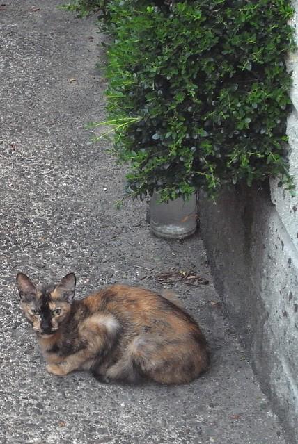 Today's Cat@2010-09-14
