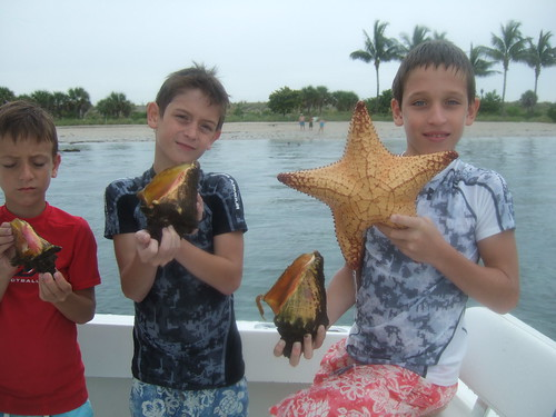 starfish and conchs