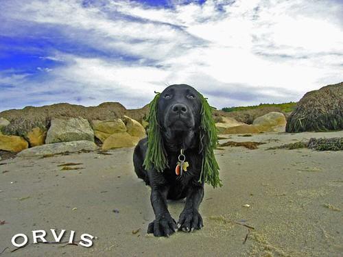 Orvis Cover Dog Contest - Winston
