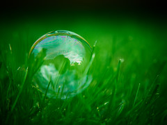 Bubble On The Lawn (Rafe Abrook Photography) Tags: stilllife green grass lawn olympus sphere bubble e3 critique