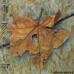 (my.third.eye) Tags: autumn winter texture nature leaves leaf oneleaf urbannature 500x500 memoriesbook specialpictures lightpainters texturesquared memoriesbook5 —obramaestra—