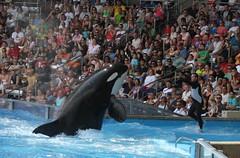 Believe (Seals4Reals) Tags: world park blue sea aquarium orlando marine florida dolphin united september malia believe killer whale orca states seaworld kayla shamu kalina 2010 katina horizons bottlenose orcinus nalani tilikum trua