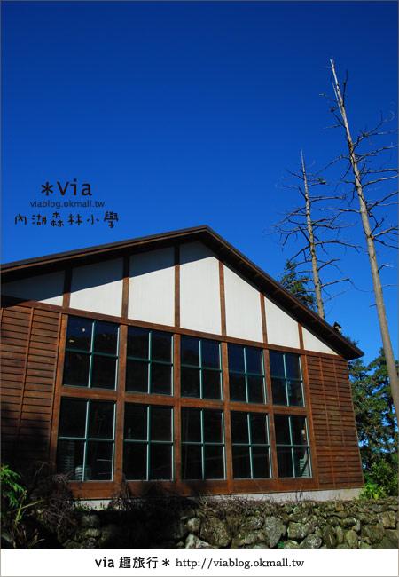 【溪頭一日遊】森林中的夢幻校園~內湖森林小學43