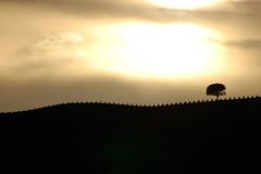 (duende pillin) Tags: trees italy cloud naturaleza sun mountain tree sol nature alberi arbol italia nuvole arboles natura sicily monte sole montaa albero mont sicilia trapani nubles gibellina
