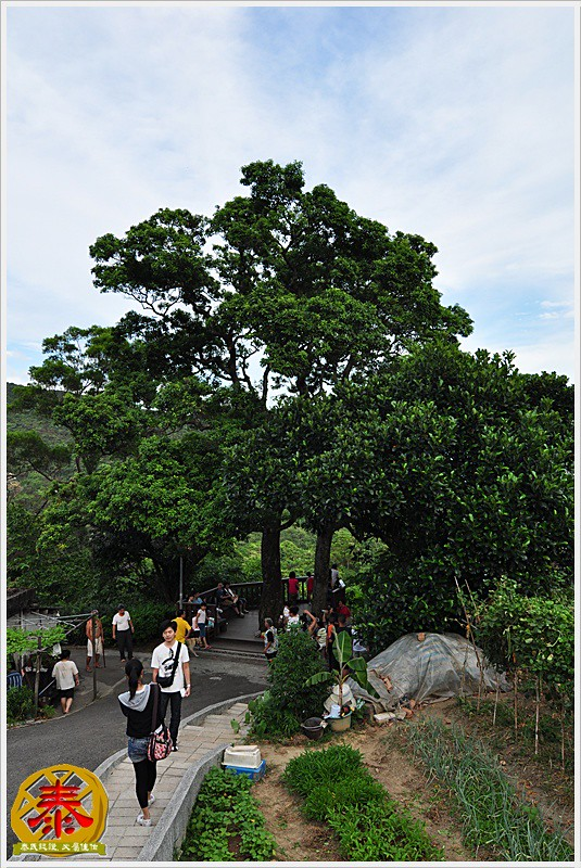 白石湖吊橋a (12)