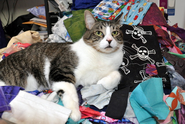 Having tried his hand at knitting, Bob T Cat has moved on to quilting