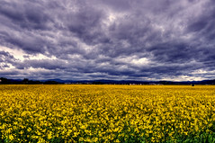 Campo giallo (socrates197577) Tags: primavera nikon nuvole day cloudy paesaggi hdr paesaggio nuvoloso photomatix mywinners platinumheartaward me2youphotographylevel1