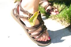 leaf in lexy's shoe (Raymond Zoellick) Tags: camera pink summer brown green girl grass sunshine digital canon shoe rebel leaf dof bokeh sandals depthoffield nails sandal unedited