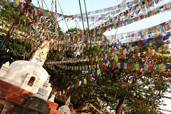 "Swayambhunath 3 (David OMalley) Tags: world life street wood nepal urban mountain mountains streets heritage beautiful beauty architecture square asian pagoda site cosmopolitan ancient asia king vishnu market buddha stupa buddhist markets royal kingdom streetlife buddhism unesco exotic busy valley civilization kathmandu himalaya shiva hindu hinduism durbar metropolitan himalayas monarchy chedi subcontinent ""ancient नेपाल newar newars civilization"" पाटन संघीय लोकतान्त्रिक गणतन्त्र नेवा"