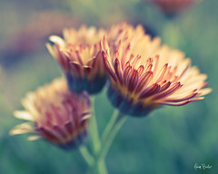 first breath ([Adam Baker]) Tags: summer orange flower green canon bokeh arboretum bloom cornell plantations adambaker hbw 50mm25macro 5dmarkii petob