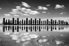 thirty-two (nicola tramarin) Tags: longexposure trees sky bw italy alberi clouds italia nuvole cielo ricefield reflexions riflessi bianconero biancoenero emiliaromagna riflesso risaia reflextions lungaesposizione nicolatramarin