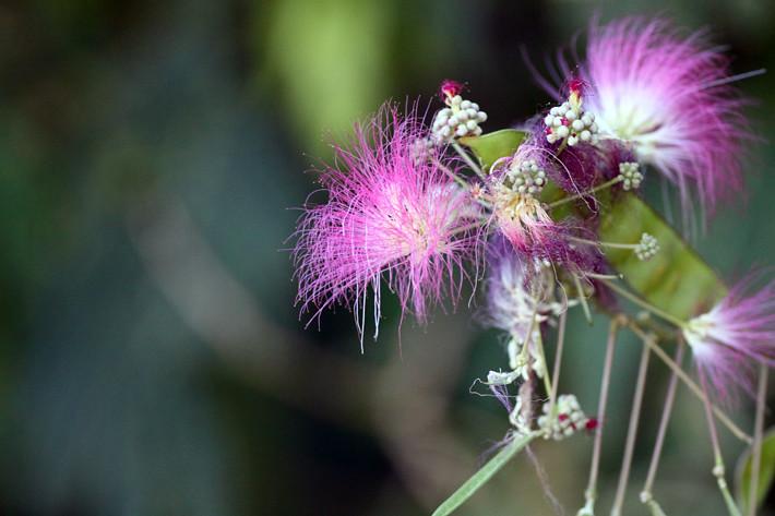091710_flower02