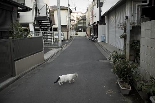 JC0131.92 東京都新宿区新宿7 sn35#