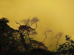 Detalhe da Reserva do Parque do Ing com Neblina (final de tarde) - Terespolis - RJ (Valcir Siqueira) Tags: nature