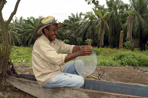 $400 mil millones pierde los productores de palmicultura por diversas enfermedades