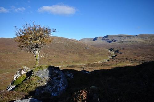 Lone Tree and Creag Meagaidh