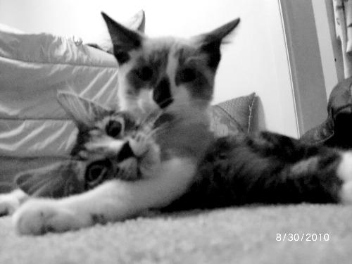 cute kittens cuddling