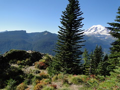 Rainier from near rocky vista on Shriner Peak trail.