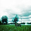 Nettar wide open (*Julius*) Tags: city sea rabbit bunny 120 water grass vintage mediumformat suomi finland bay crossprocessed helsinki shore expired kodake100vs tokoinranta zeissikonnettar xprod 51716 citykani