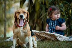 Buddy Guard (Haroldo Trombetta) Tags: dog baby beagle children kid yawn perro cao cachorro bebe criança ht bocejo crianca nenem fuba haroldo trombetta