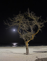 Beach Tree (pixiepic's) Tags: sea moon tree beach night sand shadows majorca sacoma rubyphotographer