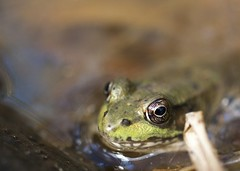 "Frog eye • <a style=""font-size:0.8em;"" href=""http://www.flickr.com/photos/30765416@N06/5057159000/"" target=""_blank"">View on Flickr</a>"