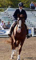 WEG 064 (FireflyFan) Tags: world park horse irish kentucky games connemara equestrian draft weg 2010 khp acps