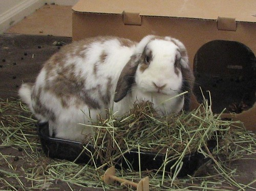 betsy sitting in the hay bowl