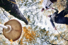 10|10|10 : searching mushrooms (Galep Iccar) Tags: autumn italy tree forest canon mushrooms october italia fisheye funghi paesaggi canoneos hdr foresta ottobre 450d canon450d canoneos450d galep iccar galepiccar pelagracci cristianopelagracci 101010 cristianopelagracciitalyitalia cristianopelagraccicanon canoneoscanoneoscanoneos450d450d