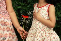 إني ممتنة () (عفاف المعيوف) Tags: flower friend وردة زهرة طفولة صداقة محبة أخوة