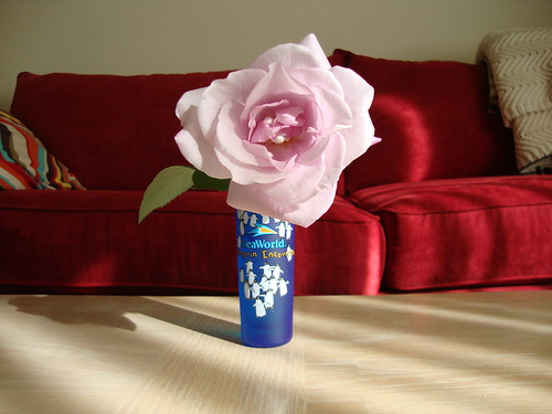 last rose of the season?  in a SeaWorld shot glass
