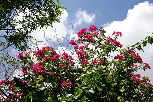 My garden 0079 September 24, 2010