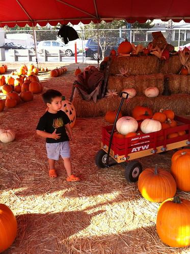 Finn fills up his wagon