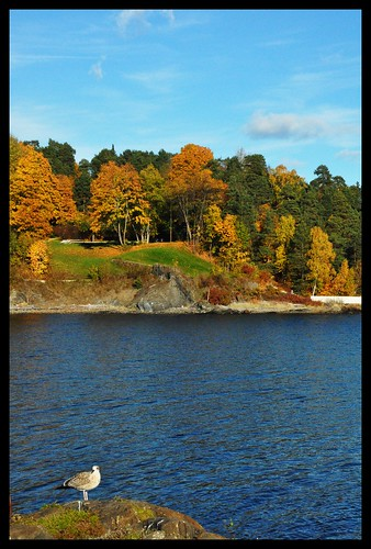 Fall on the Fjord