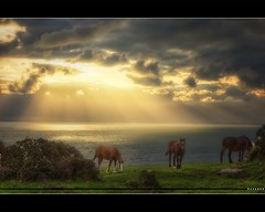 Feel Free [Explore 40] (Vincent.RCT Photographies) Tags: light horse cloud sun seascape france beach animal landscape nikon ray d70s rays nuage normandy plage hdr dreamscape waterscape bassenormandie herquemoulin haaghun