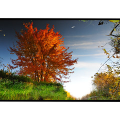 parallel world (anniedaisybaby) Tags: autumn orange colour reflection tree green water creek gold manitoba blaze parallelworld interlake winnipegbeach upsidedownworld boundarycreek