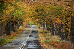 Autumn Lane (rjseg1) Tags: road autumn trees orange fall leaves michigan lane segal rjseg1