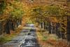 Autumn Lane (rjseg1) Tags: road autumn trees orange fall leaves michigan lane segal rjseg1