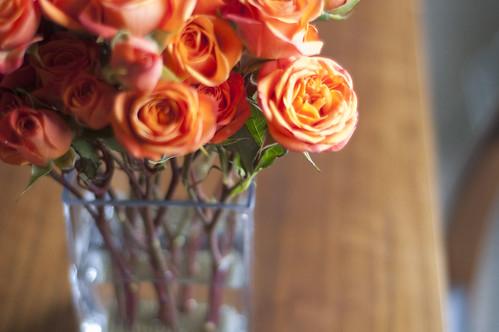 tea roses, close