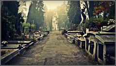 (Violen's photography) Tags: road old autumn fall cemetery grave graveyard fog dead death cross path tomb tombstone foggy poland polska lane cieszyn