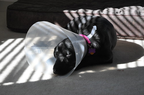 Dozing in the Sun (Tube-Tying Recovery Hood)