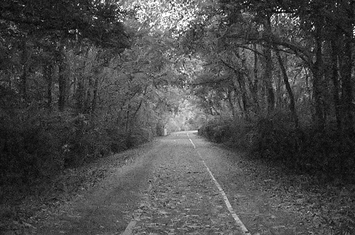 Grant's Trail and Gravois Creek Conservation Area, in Saint Louis County, Missouri, USA - forest scene converted to black and white