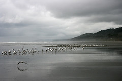 Kalaloch, Washington (russ david) Tags: park county beach washington september national jefferson olympic 2010 kalaloch