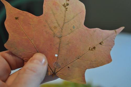 Leaf Wreath - glue dots on leaf