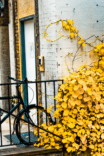bike and leaves (1 of 1)