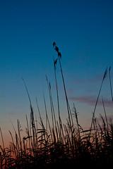 100812_0058_Worpswede (blichb) Tags: sunset germany deutschland sonnenuntergang gras worpswede niedersachsen fotokurs canon50d blichb