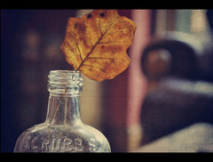Holding on to Autumn {Explored fp} (Paisley patches (coming and going)) Tags: texture leaf bottle nikon nikkor scrubs kimklassentexture